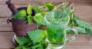 Top Eight Health Benefits of Stinging Nettle Powder