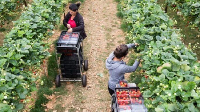 Ochard pickers urgently wanted in Canada