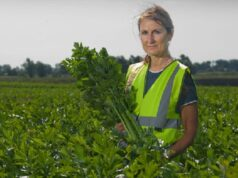 Spinach Picking Jobs in Canada