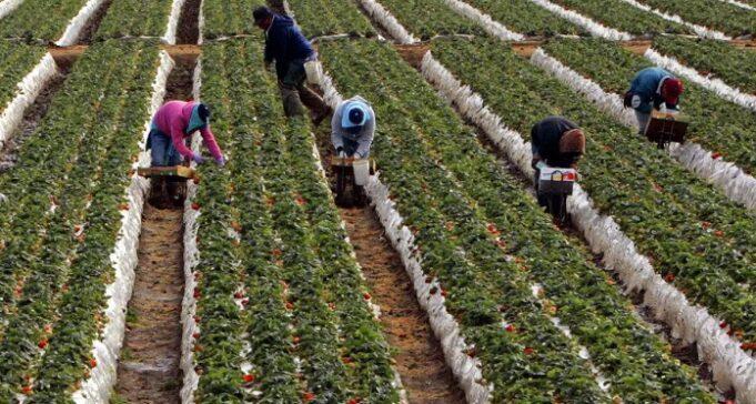 Ochard picking jobs in Canada