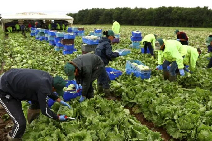 Vegetable Pickers and Packers Wanted Urgently in Canada